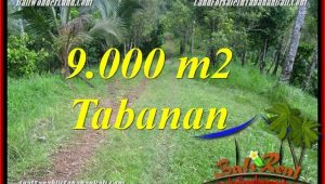 Beautiful PROPERTY 9,000 m2 LAND FOR SALE IN TABANAN BALI TJTB364