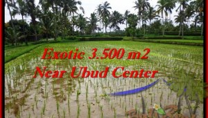 Affordable PROPERTY LAND SALE IN Ubud Tegalalang BALI TJUB477