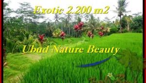 Affordable UBUD 2,200 m2 LAND FOR SALE TJUB480