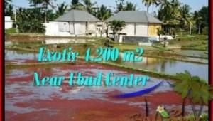 4,200 m2 LAND SALE IN UBUD TJUB502