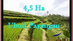 FOR SALE 45,000 m2 LAND IN UBUD TJUB533