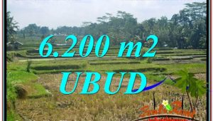 Exotic PROPERTY 6,200 m2 LAND IN Ubud Payangan FOR SALE TJUB631