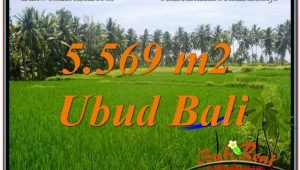 Beautiful UBUD BALI 5,569 m2 LAND FOR SALE TJUB642