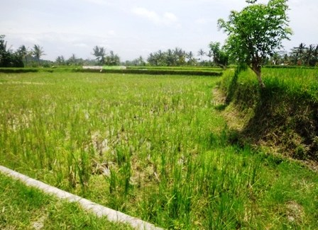 Land for sale in Ubud Bali 2,700 sqm in Ubud Pejeng