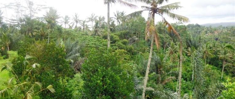 Land for sale in Ubud by the river  in Ubud Tegalalang Bali