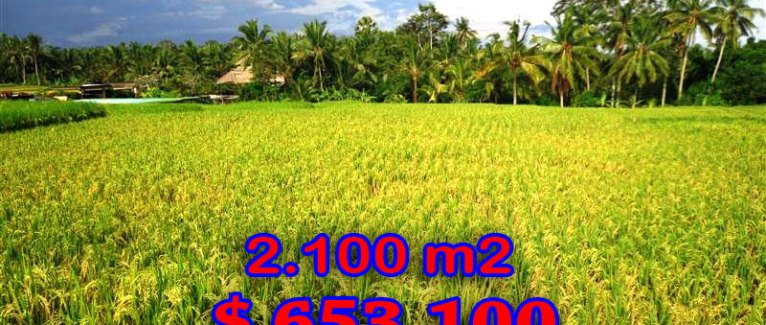 Land in Ubud Bali For sale 21 Ares   Close to Ubud Center