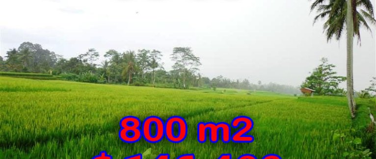 Land for sale in Ubud Bali 800 sqm in Ubud Tegalalang