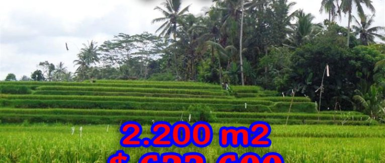 Exotic Land for sale in Ubud Bali 22 Ares in Ubud Center