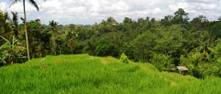 Land for sale in Tabanan Bali 60 Ares in Tabanan