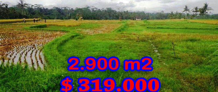 Bali Property for sale, Stunning land for sale in Ubud Bali  – 2.900 sqm @ $ 110