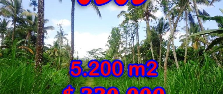 Fantastic Land for sale in Bali, rice fields and river valley view in Ubud Tegalalang– TJUB296