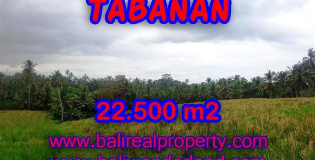 Land in Bali for sale, Stunning view in Tabanan Bali – TJTB066