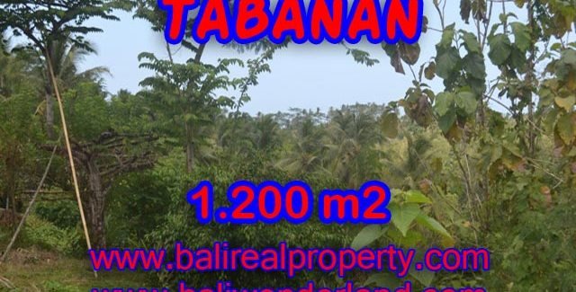 Land for sale in Tabanan Bali, Amazing river view in TABANAN BARAT Bali – TJTB072