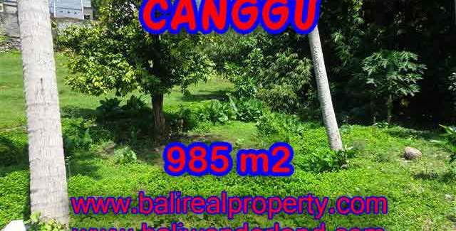 Astonishing Property for sale in Bali, LAND FOR SALE IN CANGGU Bali – TJCG147
