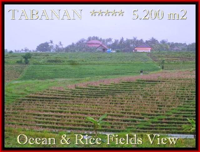 Affordable TABANAN 5.200 m2 LAND FOR SALE TJTB185