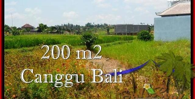Magnificent PROPERTY 200 m2 LAND IN Canggu Pererenan BALI FOR SALE