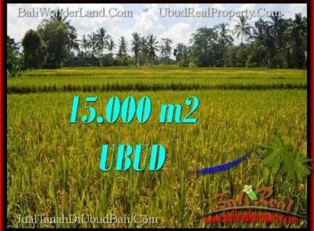 FOR SALE Affordable LAND IN Ubud Tegalalang BALI TJUB551