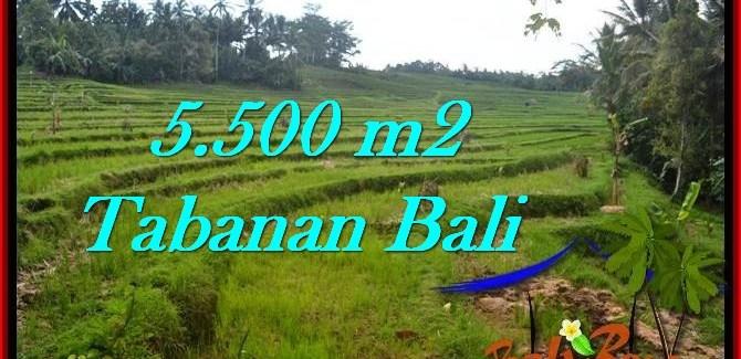 Exotic PROPERTY 5,500 m2 LAND FOR SALE IN Tabanan Penebel TJTB280