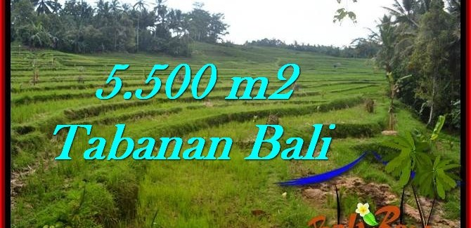 Exotic PROPERTY 5,500 m2 LAND FOR SALE IN Tabanan Penebel TJTB280