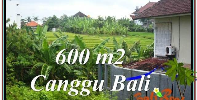 Affordable 600 m2 LAND SALE IN Canggu Brawa TJCG206