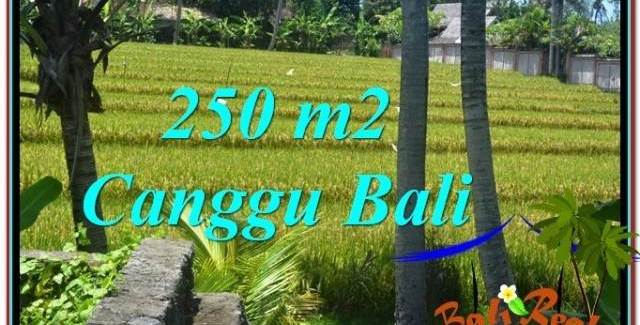250 m2 LAND SALE IN Canggu Pererenan TJCG207