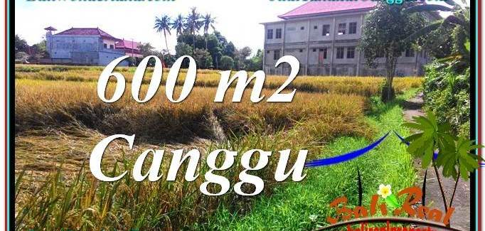 Affordable PROPERTY 600 m2 LAND IN Canggu Pererenan BALI FOR SALE TJCG211