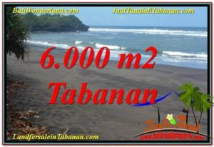 Beautiful 6,000 m2 LAND SALE IN Tabanan Selemadeg TJTB345