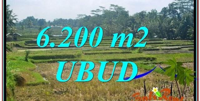 Affordable 6,200 m2 LAND SALE IN Ubud Payangan BALI TJUB631