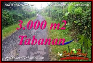 Exotic PROPERTY 3,000 m2 LAND FOR SALE IN TABANAN Selemadeg BALI