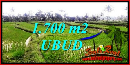 Affordable 1,700 m2 LAND FOR SALE IN Ubud Tegalalang TJUB745