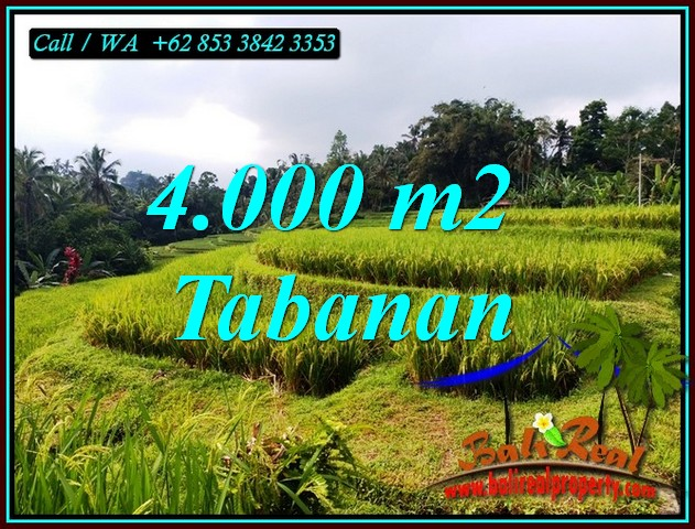 Magnificent PROPERTY 4,000 m2 LAND FOR SALE IN TABANAN TJTB499A
