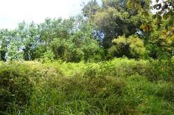 TJCG113 Land for sale in Canggu Bali