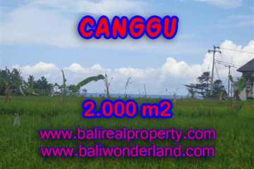 Magnificent Land for sale in Bali, Rice fields view closed to the beach in Canggu Cemagi Bali – TJCG140