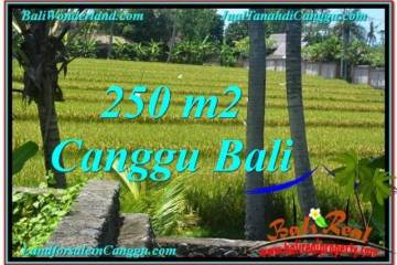 Beautiful Canggu Pererenan BALI LAND FOR SALE TJCG207