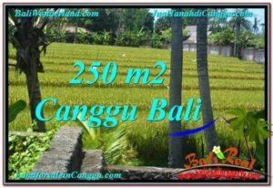 CANGGU 250 m2 LAND FOR SALE TJCG207
