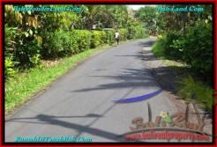 Affordable PROPERTY TABANAN LAND FOR SALE TJTB240