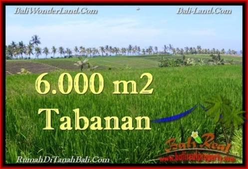 Exotic PROPERTY 6,000 m2 LAND IN Tabanan Selemadeg FOR SALE TJTB267