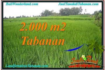 Beautiful PROPERTY 2,000 m2 LAND FOR SALE IN Tabanan Penebel TJTB303