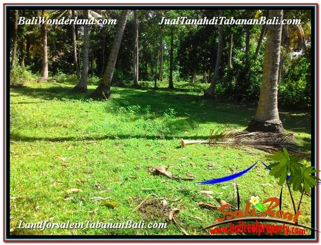 Beautiful PROPERTY LAND IN Tabanan Selemadeg BALI FOR SALE TJTB327