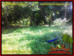 Magnificent PROPERTY LAND IN TABANAN BALI FOR SALE TJTB338