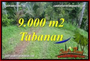 FOR SALE Affordable 9,000 m2 LAND IN Tabanan Selemadeg Timur BALI TJTB364