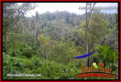 Magnificent PROPERTY 20,000 m2 LAND FOR SALE IN Tabanan Selemadeg Timur BALI TJTB365