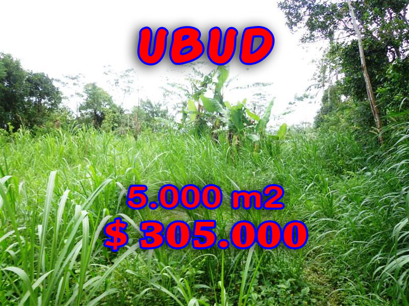 Land for sale in Ubud Bali rice fields view by the river – TJUB213