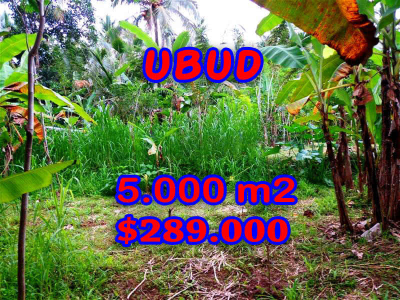Land for sale in Ubud Bali by Bali Real Property – TJUB256