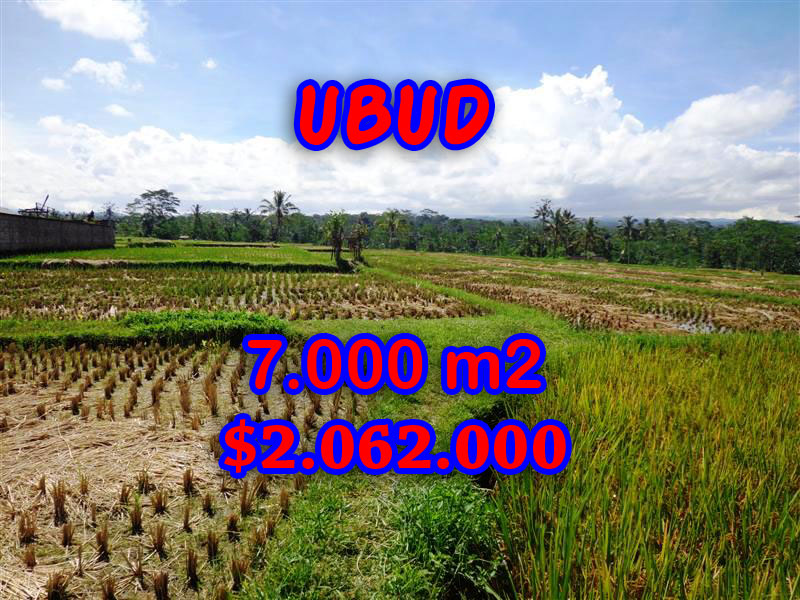 Land for sale in Bali, Exotic view in Ubud Bali – 7.000 sqm @ $ 294