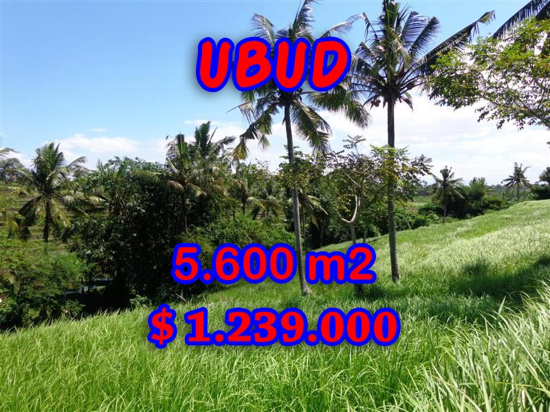 Land for sale in Ubud Bali, Unbelievable view in Ubud Center – TJUB299