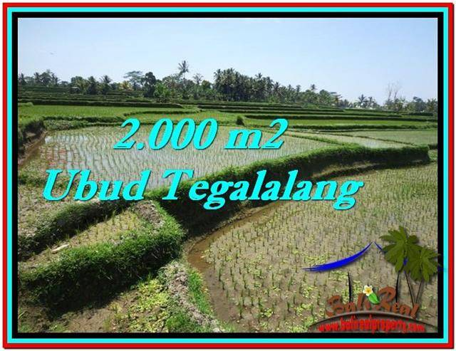 Beautiful PROPERTY 2,000 m2 LAND FOR SALE IN Ubud Tegalalang TJUB529