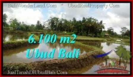 Exotic 6,100 m2 LAND SALE IN UBUD BALI TJUB547