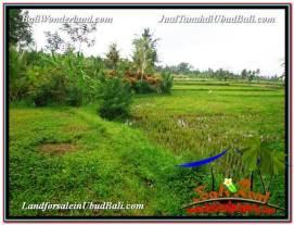 FOR SALE LAND IN Ubud Pejeng BALI TJUB577
