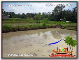 Magnificent PROPERTY 2,080 m2 LAND IN Ubud Pejeng FOR SALE TJUB582